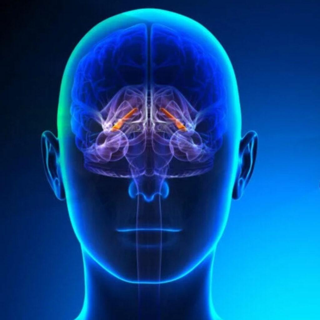 hippocampo-humano-cerebro